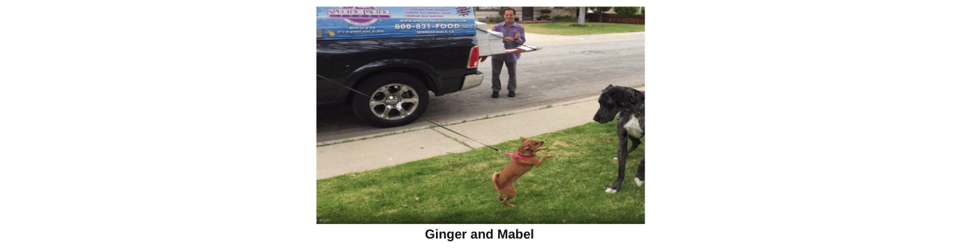 Ginger and mable