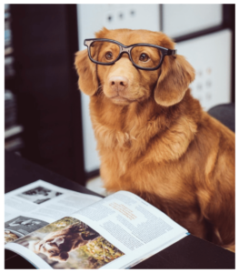 Goldie with glasses